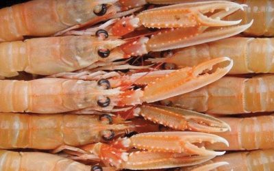 Scampi from Scotland – available from stock