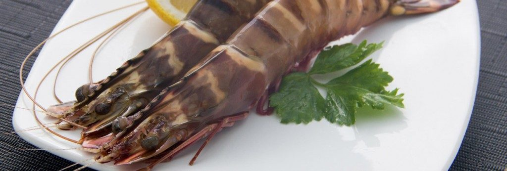 Sea Tiger Shrimps
